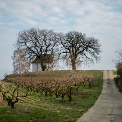 Az európai év fája