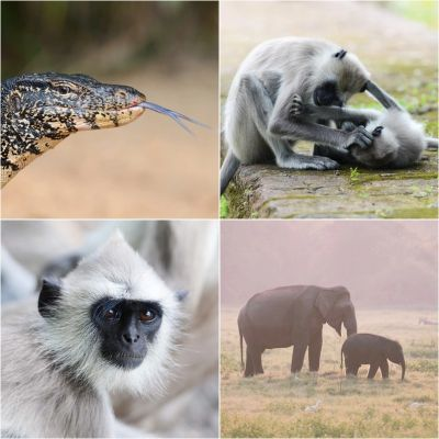 Wildlife of Sri Lanka