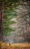 Erdei találkozás A kép Balaton-felvidéken készült november végén. Beállítottam a kompozíciót, majd vártam, hogy egy állat megjelenjen a képben. Fél órán belül megjelent ez az őz és pontosan azon a helyen ahova vártam.