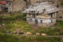 Élő középkor – Ahol a vérbosszú kötelez A grúziai Svaneti tartomány hosszú ideig elszigetelve maradt, a Kaukázus közepén. Ennek jó példája a hegyi tájba olvadó középkori kinézetű falvak és a toronyházak, melyek a kilencedik században épültek, amikor a szvánok szembe kerültek az ellenséges észak-kaukázusi törzsekkel. Ahelyett, hogy erődöt építettek volna, úgy döntöttek, hogy bevehetetlen tornyokat emelnek, melyek nemcsak az idegen hódítóktól és fosztogatóktól, hanem erre a vidékre a mai napig jellemző vérbosszú ellen is védelmet nyújtottak. A szvánokra jellemző a kétnyelvűség (a grúz és a íratlan kihalóban lévő szván nyelv).