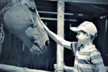 Érintés. Az első találkozás.... avagy  bölcs embernek ló való, mert lóvá tesz az ember, s emberré a ló.