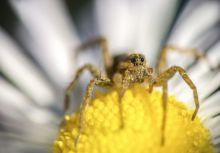 Látlak Az a pók fotó elég trükkösen készült. Egy 105mm nikon makro objektív elé egy fix 50mm objektívet fogtam a nagyobb nagyítás érdekében! A pók nem volt nagyobb mint egy gyufa feje.