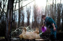Vágás Disznóvágás a Tisza-parton január 31-én.