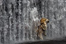 Zuhany 2015.07.22 - Egyes felmérések szerint 2015 Júliusa volt minden idők legforróbb hónapja. Az idén is sorra dőltek a melegrekordok,a forró napok pedig megviselték az emeberek és az állatok szervezetét is