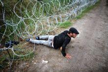 Kerítés alatt 2015.08.26. Röszke, magyar-szerb határ Szíriai menekült sikeresen leküzdi a pengekerítést.
