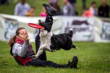 """""""Elkapom! Elkapom! Elkapom!"""" Május 31-én rendezték Budapesten a Kutya Frizbi Európa Bajnokságot. A kutyáknak és gazdiknak távolsági és freestyle versenyszámokban is össze kellett mérniük ügyességüket."""
