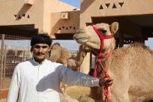 Tevepiac és vásár Tevepiac és vásár az Egyesült Arab Emirátusokban, Al-Ain város mellett.