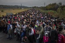 MENEKÜLTVÁLSÁG Menekültek a szlovéniai Dobovába vezető úton a horvát határ közelében október 23-án. A szomszédos országok csak nehezen tudták kezelni a menekülthullámot a magyarországi határzárt követően.