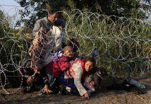 Cím nélkül Szíriai menekültek másznak át, a határon felhúzott kerítésen,  Röszke közelében,  Augusztus 27-én.