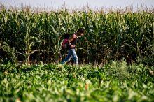 A határ közelében Menekült fiú, testvérével a hátán sétál egy kukoricamező mellett a szerbiai Horgosnál, közel a magyar határhoz, augusztus 27-én.