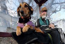 Lelkitársak Kutya és gazdája egy idő után egymásra utalttá válhat...