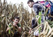 Menekültek a kukoricásban Szíriai menekültek bújnak el a katonaság elől a kukoricásban a magyar-szerb határnál, hogy elkerüljék a regisztrációt.