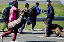 Esélytelen küzdelem Egyetlen kutyás rendőr próbálja a menekülteket megállani az M5-ös autópálya előtt szeptember 7-én Röszkénél.