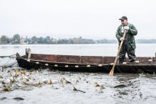 Tatai Öreg-tavi nagy halászat 2015 Halak a hálóban a 15. alkalommal megrendezett Tatai Öreg-tavi nagy halászaton 2015. október 17-én.