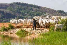 Észak-nigériai névtelen törpefalu  Észak-Nigéria, Kajuru környékbeli szórványtelepülések egyike, néhány rokon család lakta törpefalu. Lakosai letelepedett fulánik, eredetileg nomád pásztornép. Folyó víz és villany nélkül élnek sárkunyhókban. Állattenyésztéssel és földműveléssel foglalkoznak, önellátók. Piacokon értékesítik az állatokat, tejtermékeket és otthon készített árut, ha szükségük van pénzre. Ételeik általában köleskásából, tejtermékekből állnak,  húst ritkán esznek. Szarvasmarhát, kecskét eladásra tenyésztik. Bár megélhetésük rendkívül nehéz, harmóniában, boldogan élnek.